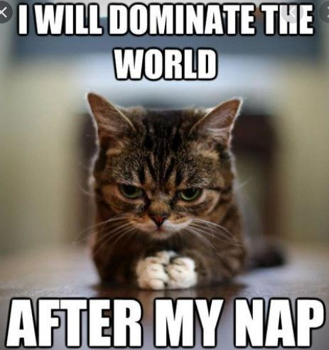sneaky cat will dominate the world after napping